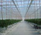 upload/gallery/37/leamington-vegtable-crops-018.jpg