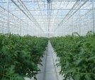 upload/gallery/37/leamington-vegtable-crops-022.jpg