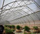 upload/gallery/32/growers-choice-5-1-.jpg