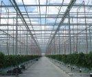 upload/gallery/37/leamington-vegtable-crops-024-1-.jpg